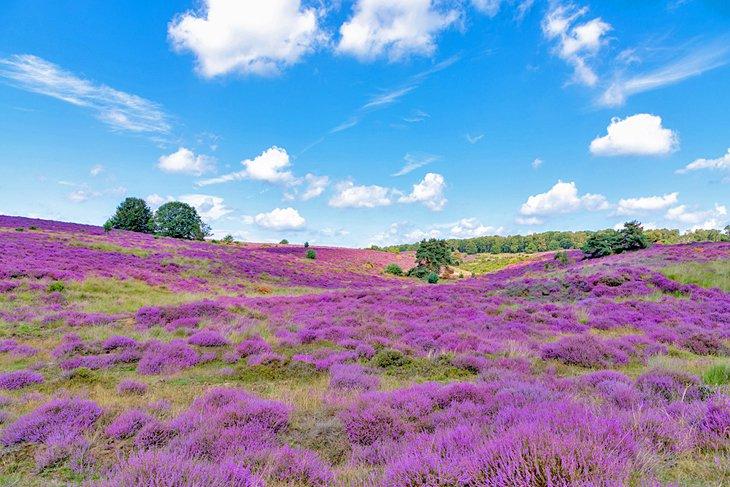Veluwezoom National Park