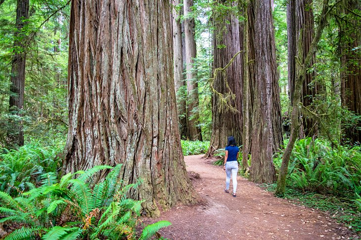 Parque estatal Jedediah Smith Redwoods