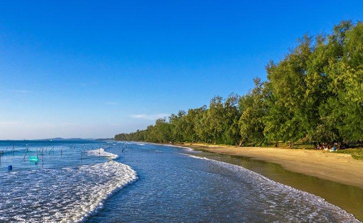 Cangrejo de playa Dai