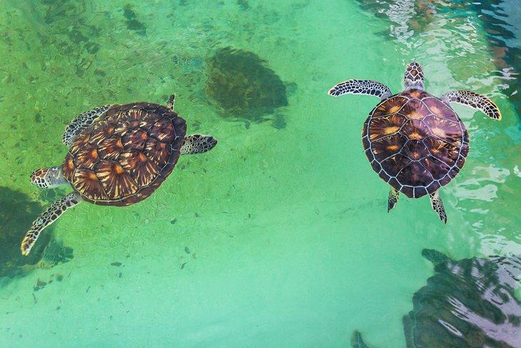 Tortugas marinas en el Museo Oceanográfico Nacional de Vietnam