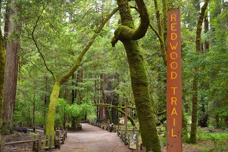 Parque estatal Big Basin Redwoods