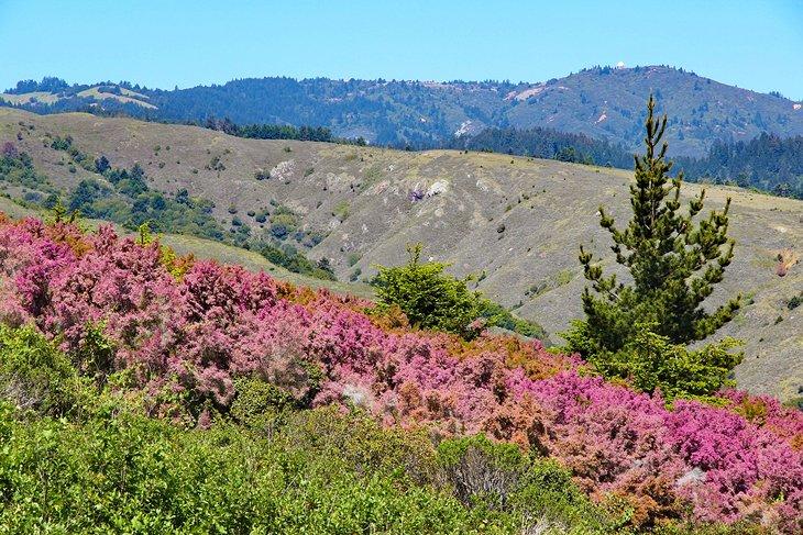 Flores en Mount Tamalpais State Park