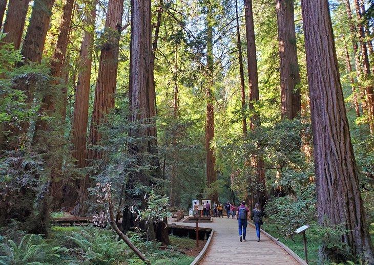 Secoyas en el Monumento Nacional Muir Woods