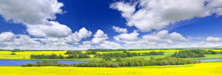 Canola fields on the Canadian prairies