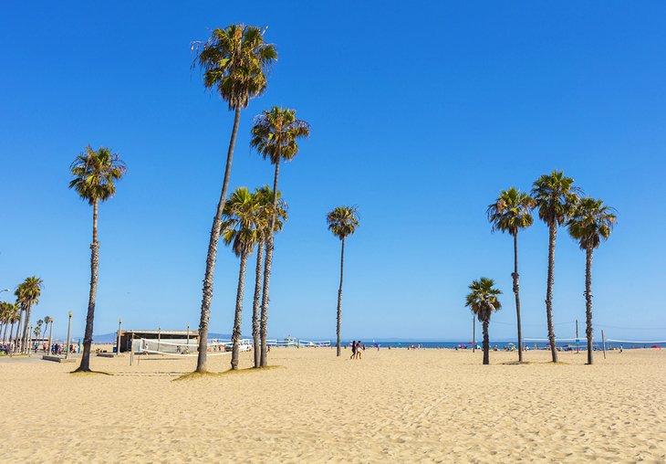 Palmeras en la playa de Venecia