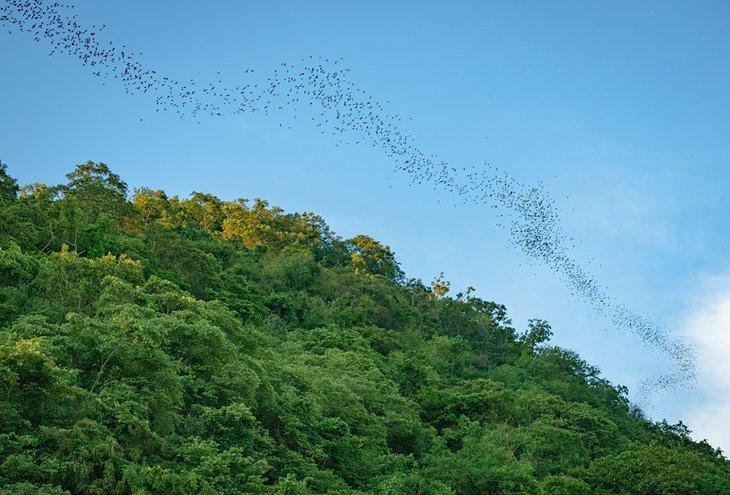 Тысячи летучих мышей пролетают над национальным парком Као Яй.
