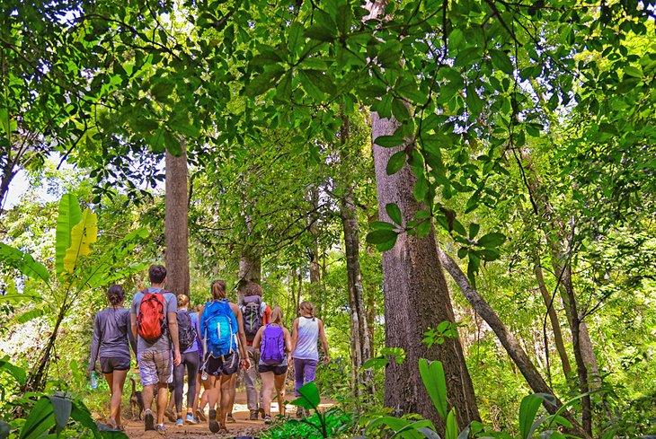 Поход группы туристов по джунглям Национального парка Као Яй.