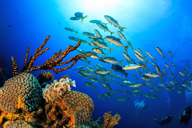 Coral reef in Grand Bahama