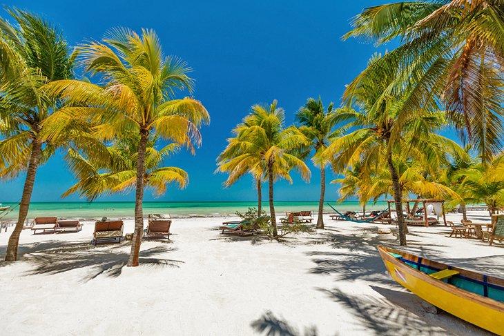 Playa bordeada de palmeras en Isla Holbox