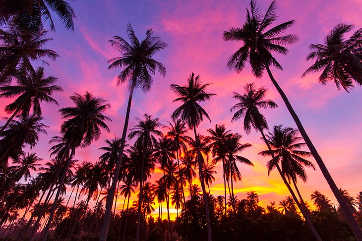 Пальмы на Самуи на закате.