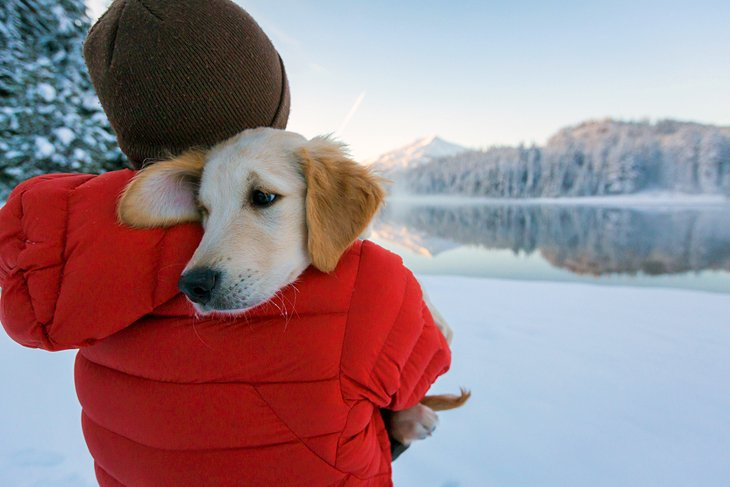10 Best Dog-Friendly Vacations in the United States | PlanetWare