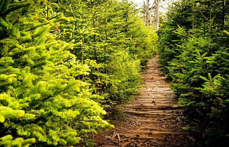 Camino a través del bosque en el sendero Gaff Point