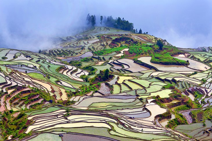 Rice paddies in Yunnan Province