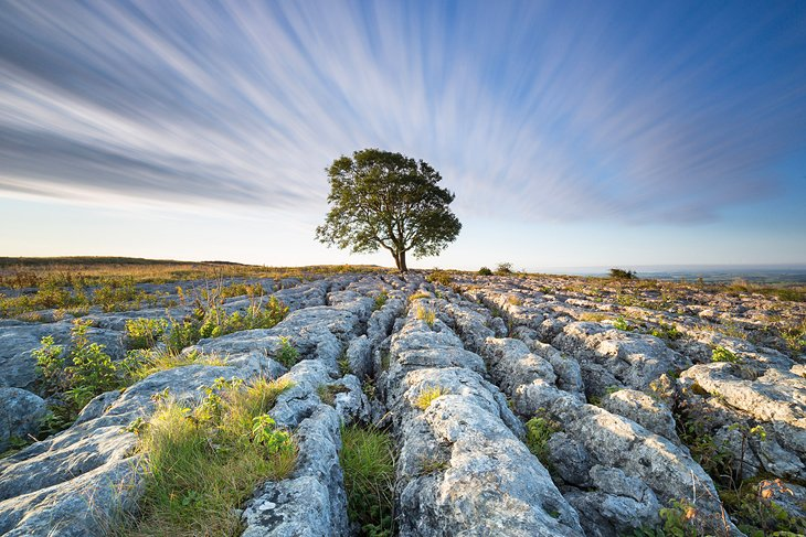 Lone tree in Yorkshire Dales National Park