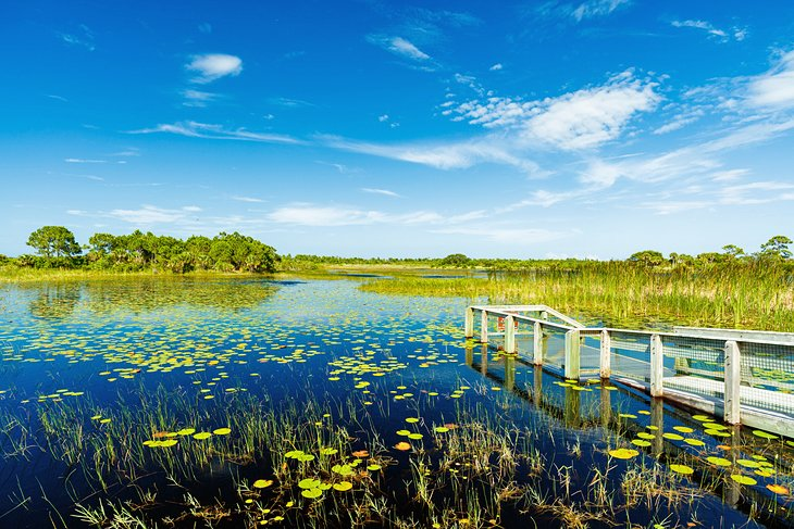 Nature preserve in Port St. Lucie, Florida