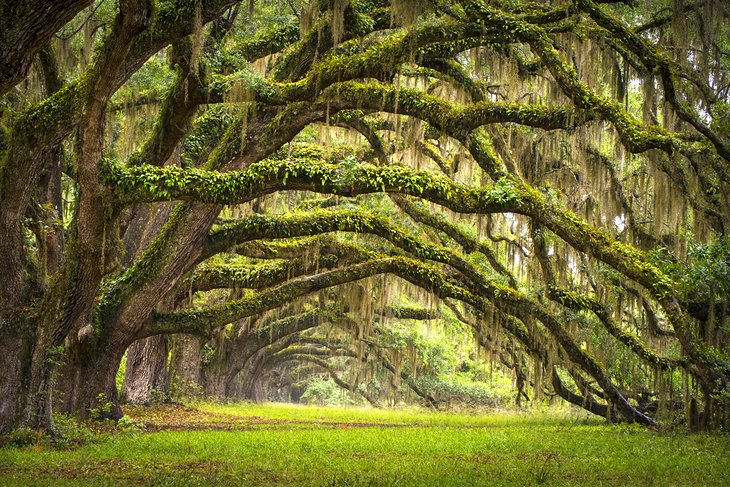 South Carolina In Pictures 20 Beautiful Places To Photograph Planetware