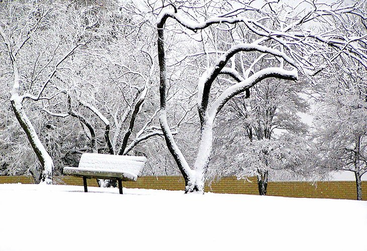 Snow-covered park in Dallas