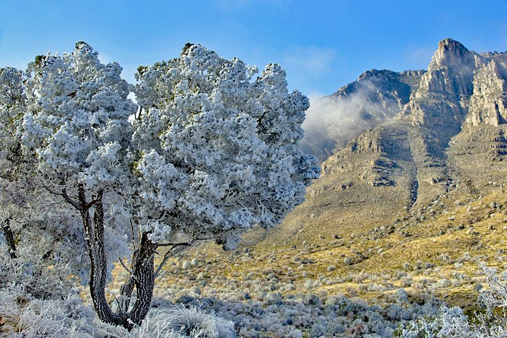 A light dusting of snow in Guadalupe Mountains National Park