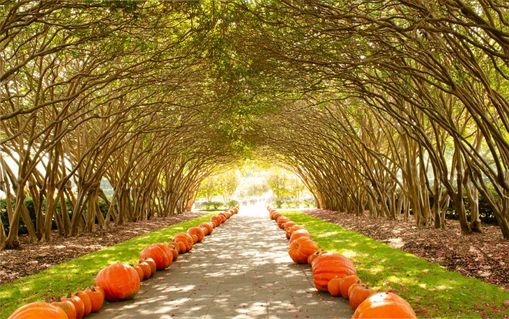 Fall pumpkin tunnel at the Dallas Arboretum and Botanical Gardens
