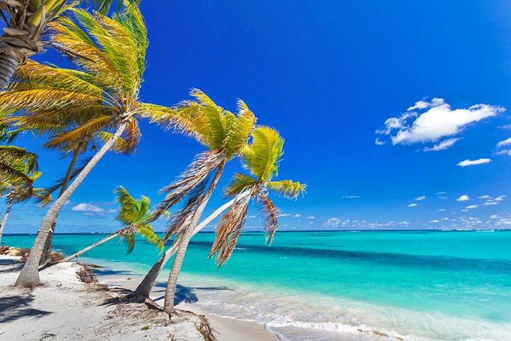 Cocoteros sobresaliendo de Shoal Bay East Beach