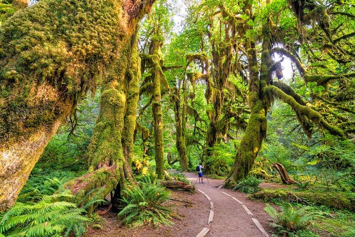 Hoh Rainforest, Parque Nacional Olympic