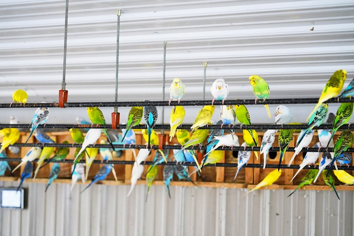 Parakeets at Timbavati Wildlife Park, Wisconsin Dells