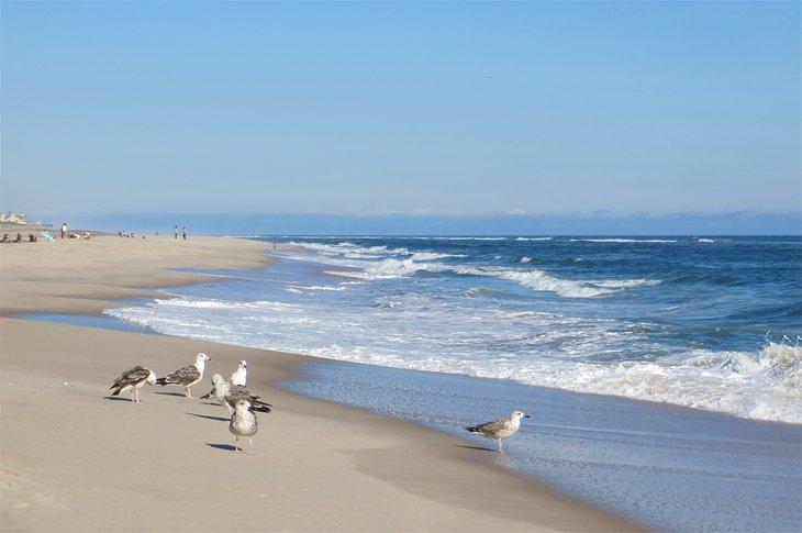 Gaviotas en Coopers Beach