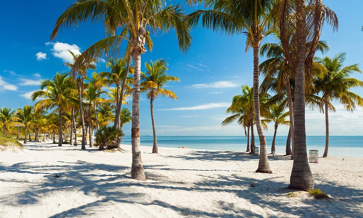 Palm trees on the beach at Crandon Park