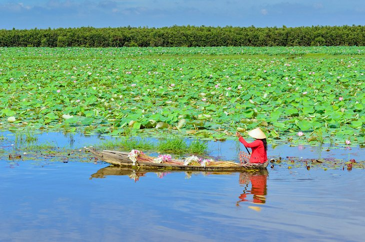 Mujer remando a lo largo del Delta del Mekong