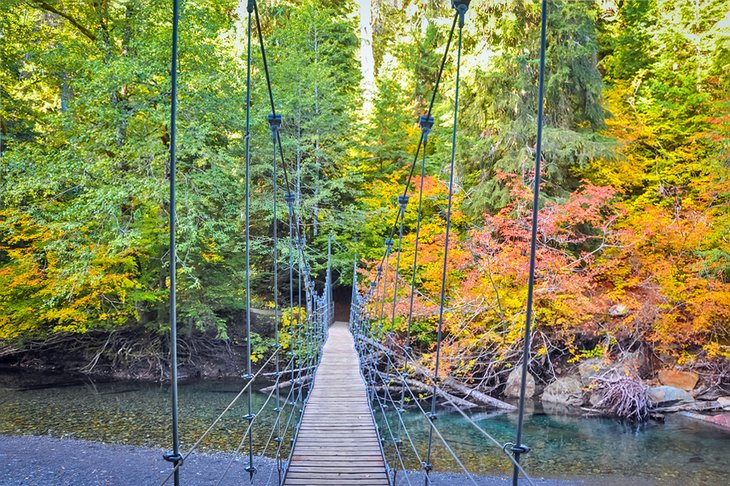 Puente colgante al sendero Grove of the Patriarchs