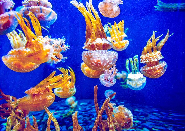 Colorful jellyfish at the Vancouver Aquarium