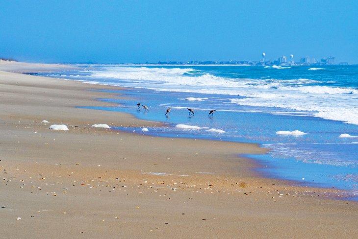 Playa de la isla de Masonboro