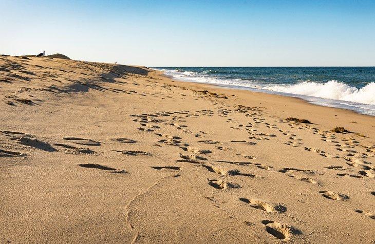 Jefe de Meadow Beach, Massachusetts