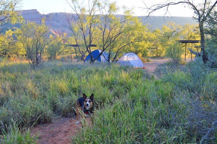 Camping with pets at Palo Duro Canyon State Park