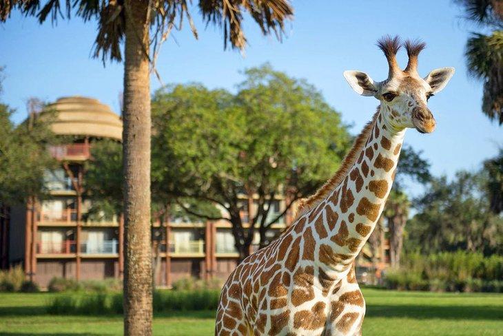 Fuente de la foto: Disney's Animal Kingdom Lodge