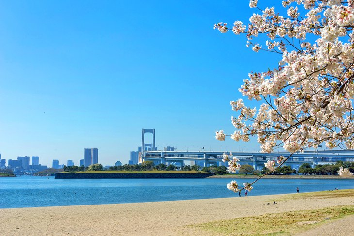 Cherry blossoms along Odaiba Beach