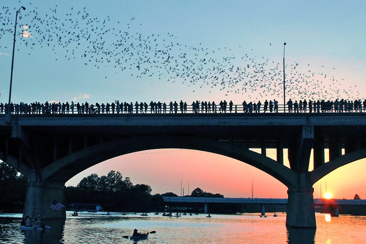 Watching the bats on Congress Avenue Bridge