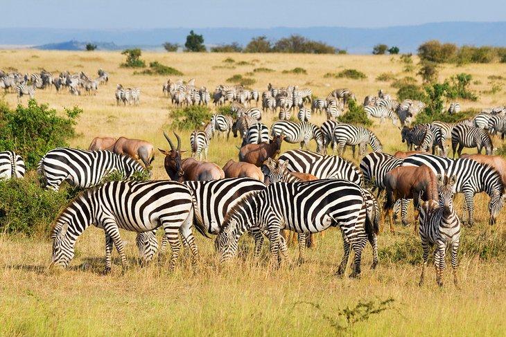 La Gran Migración en la Reserva Nacional Maasai Mara