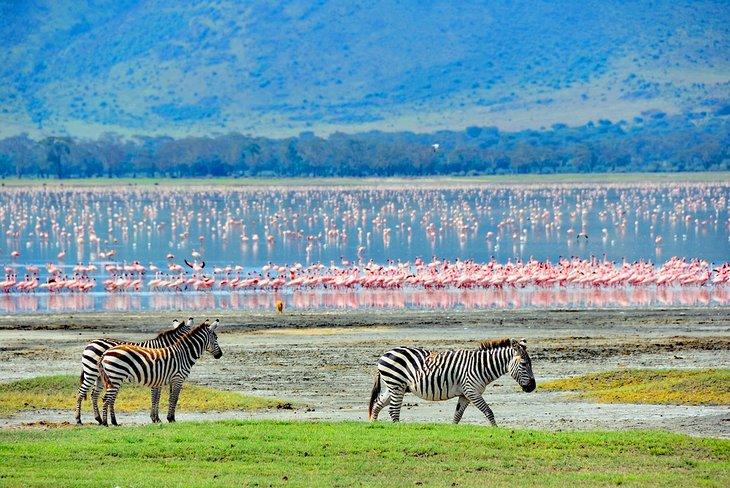 Cebras y flamencos en el cráter del Ngorongoro