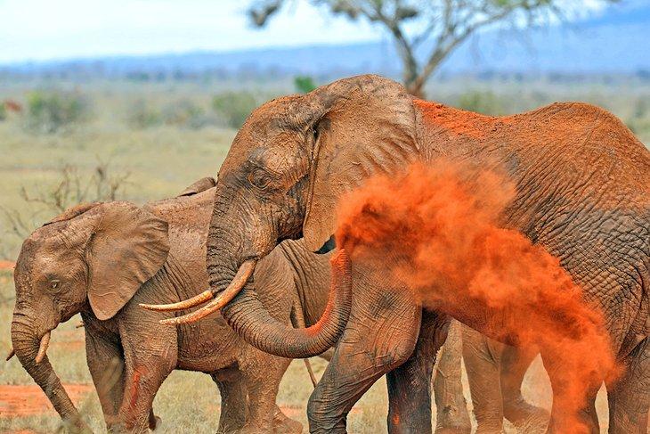 Elefantes en Tsavo East