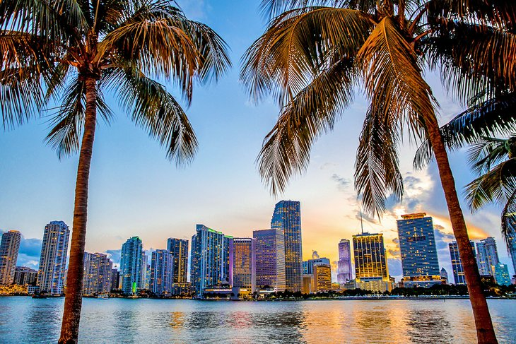 Palm trees and the Miami skyline