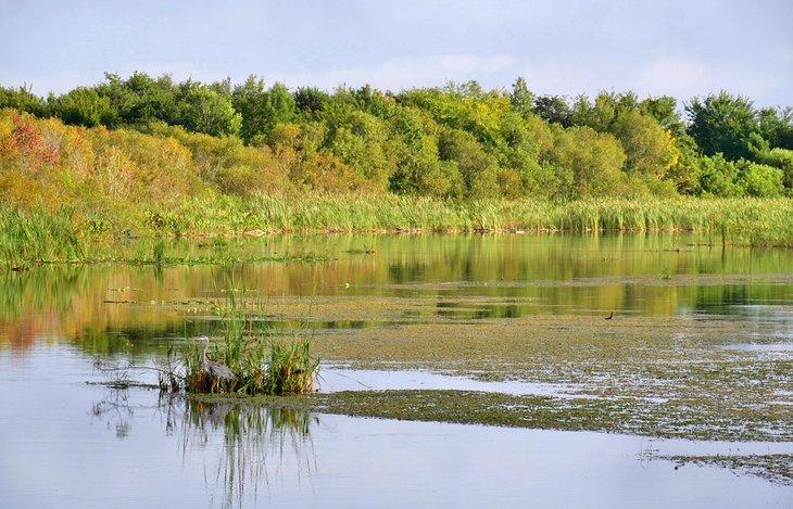 Pantanos en el lago Griffin