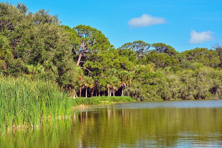 La exuberante costa en Lake Seminole Park