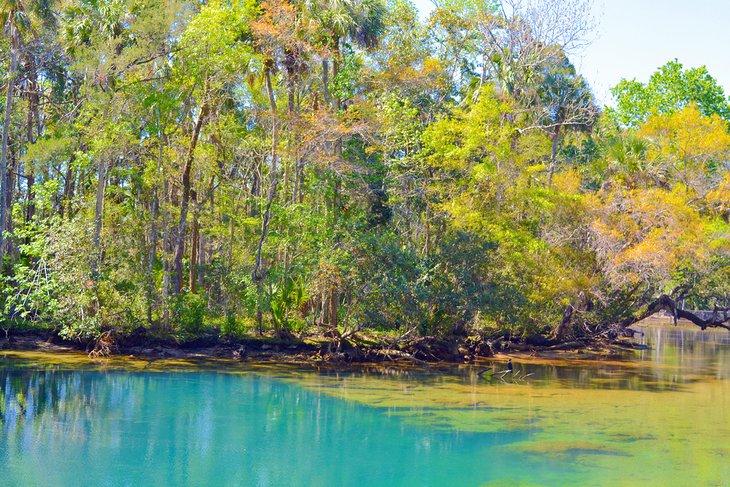 Piscina colorida en Homosassa Springs