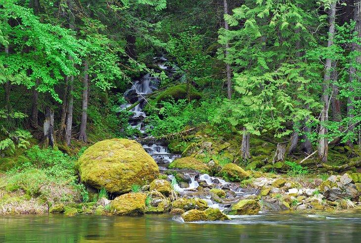 Un pequeño arroyo alimenta el río Lochsa en Idaho