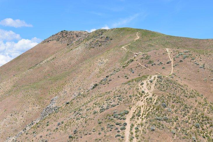 Sendero del pico Cervidae