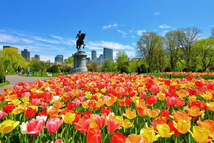 Tulipanes floreciendo en el jardín público de Boston