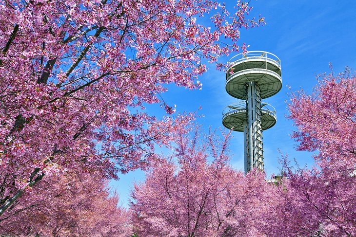 Towers of New York State Pavilion en medio de los cerezos en flor en Flushing Meadows - Corona Park