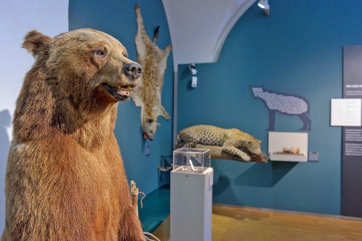 Exposición en el Museo de Historia Natural de Graz