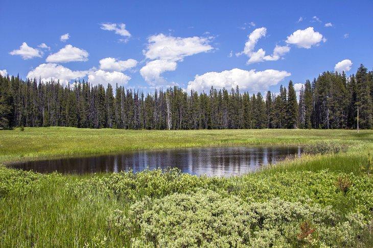 Bosque Nacional de Boise